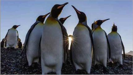 Photo of تمرين طيور البطريق تحت أشعة الشمس
