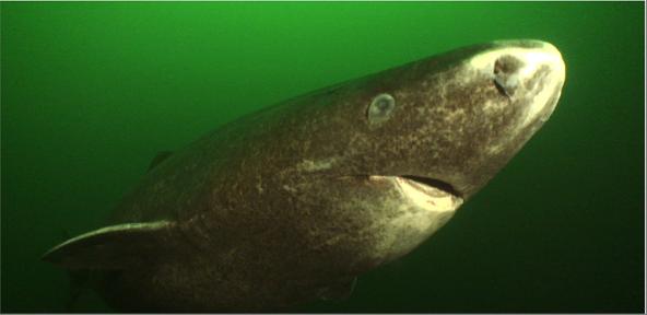 Photo of وزنه 80 طناً وطوله 20 متراً وفمه الأكبر إطلاقاً تعرَّف إلى أكبر الثدييات المائية