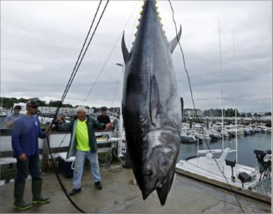 Photo of سمكة تونة بثمن 1,8 مليون دولار في اليابان
