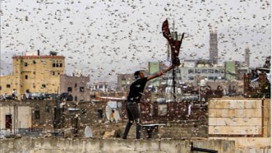 Photo of من «نِعَم» الصحراء العربيّة.. الجراد يجتاح دول شبه الجزيرة.. ويتّجه شمالاً