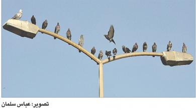 Photo of صيّادون في الحَجْر المنزليّ.. وعصافير حرّة
