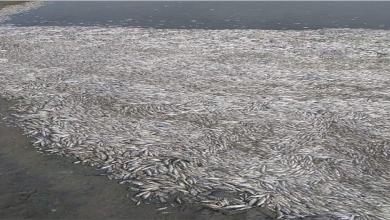 Photo of مجزرة بيئيّة تطيح بأهم ثروات العراق نفوق أطنان من أسماك