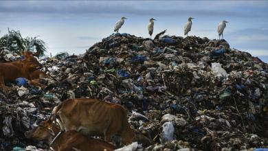 Photo of تونس… توقيف مسؤولين كبار في فضيحة «النفايات» الإيطاليّة
