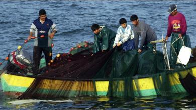 Photo of انهيار مستمر للتنوّع البيولوجيّ في سواحل شرق المتوسط