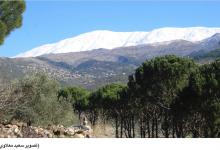 Photo of جبل حرمون متوّجاً بالأبيض النقيّ